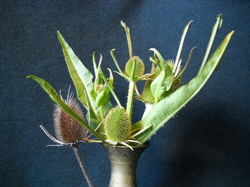 Raw Teasel: Hedgehogs to Come
