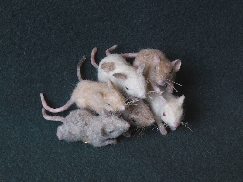 Mouse Litter 20 – The Mini Mousies